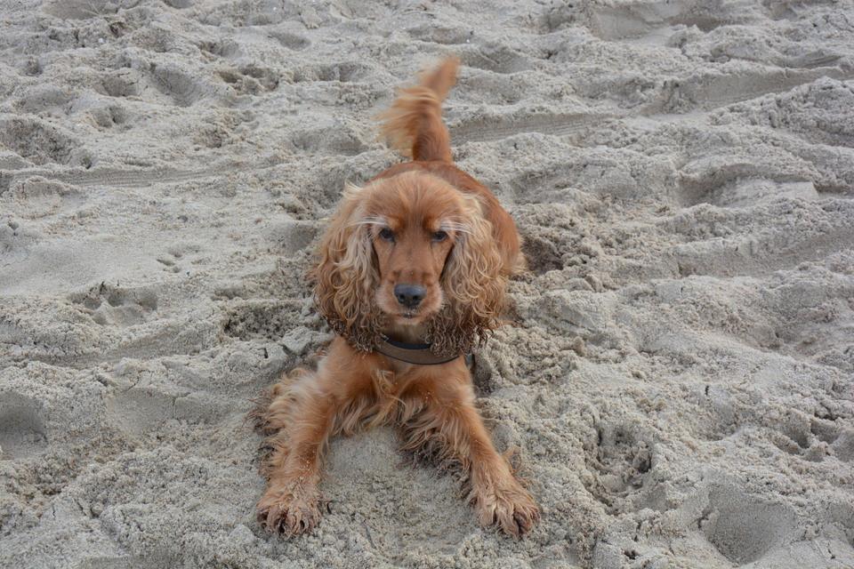 Hund im Sand