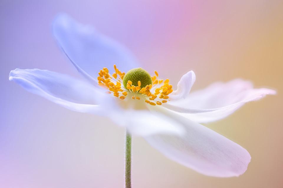 Mikroaufnahme von einer Blume