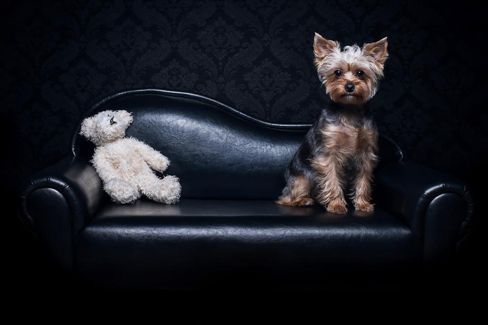 Hund positiert auf einer kleinen Couch