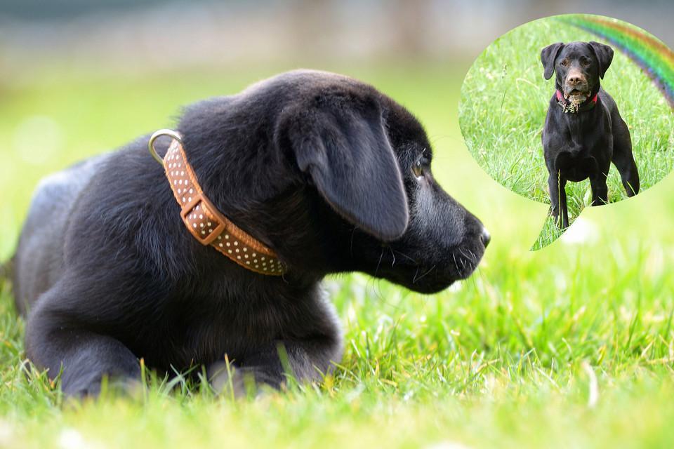 Schwarzer Hundewelpe