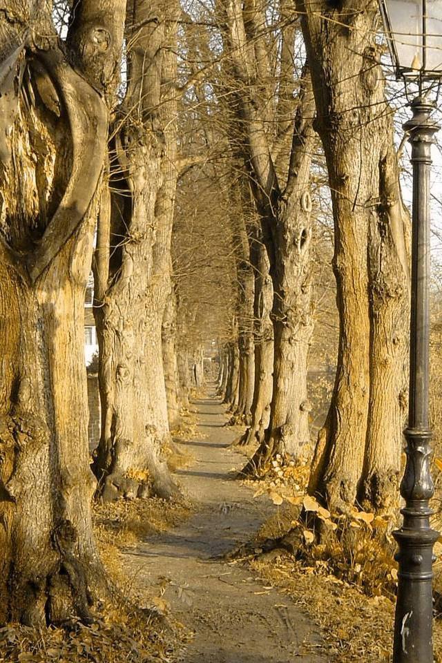 Kleiner Pfad umgeben von Bäumen
