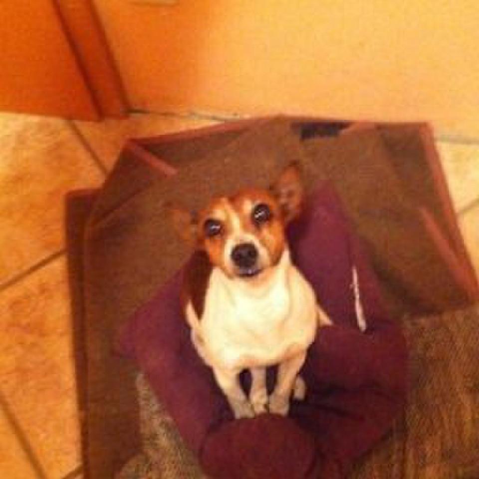 Kleiner Hund sitzt auf einer Decke