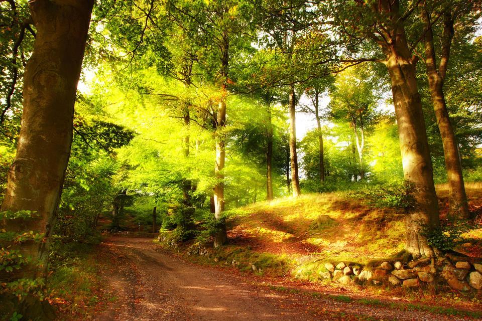 Bild einer Waldlichtung