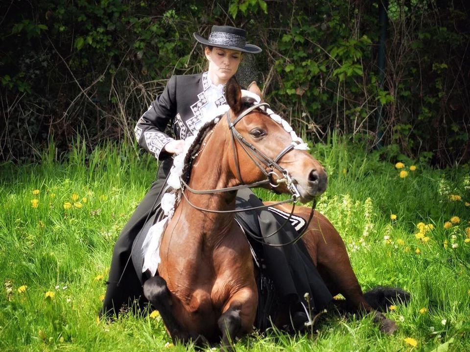 Frau sitzt auf einem liegenden Pferd