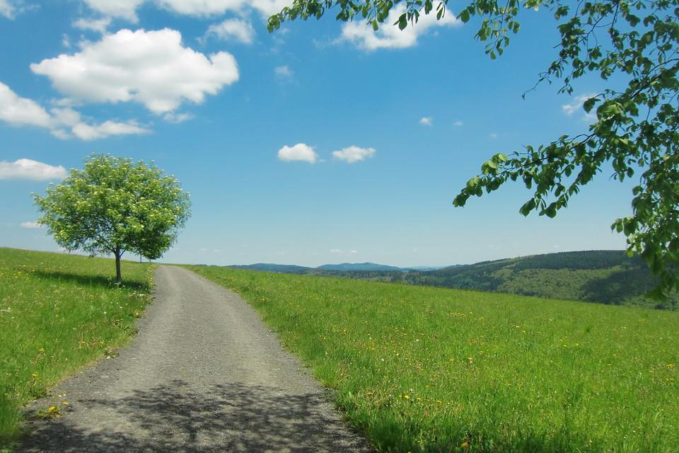 Schmaler Weg auf blühender Weide