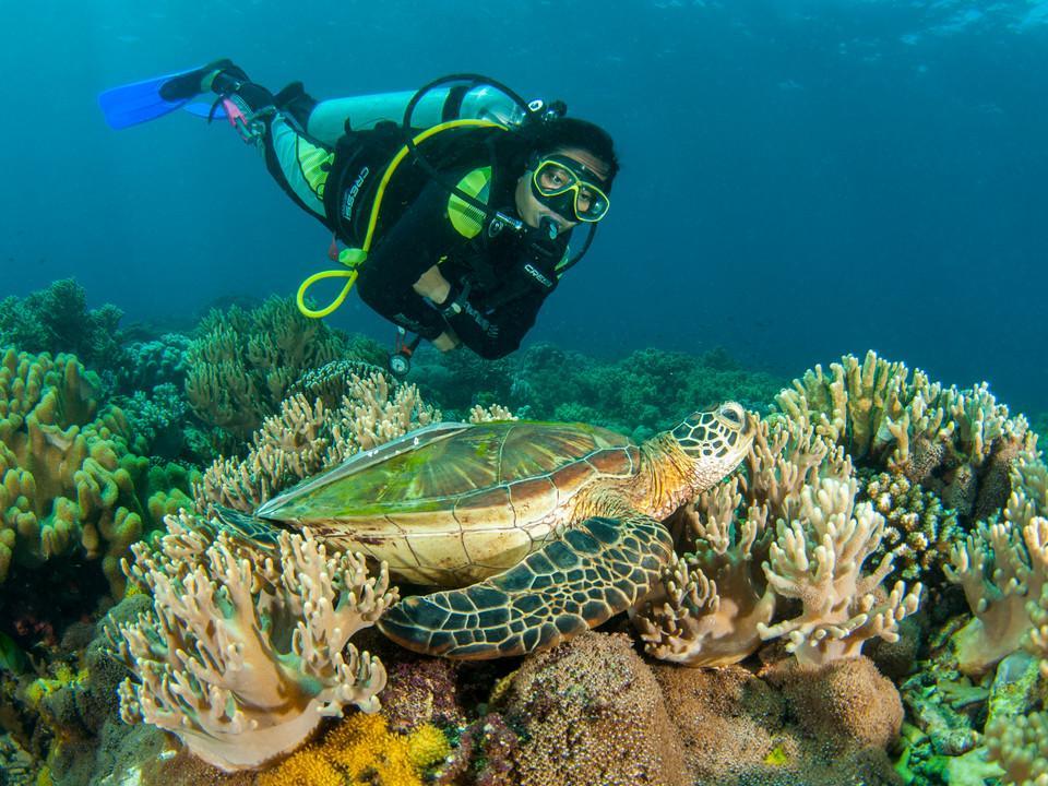 Mann ist beim Tauchen einen Schildkröte sehr nah