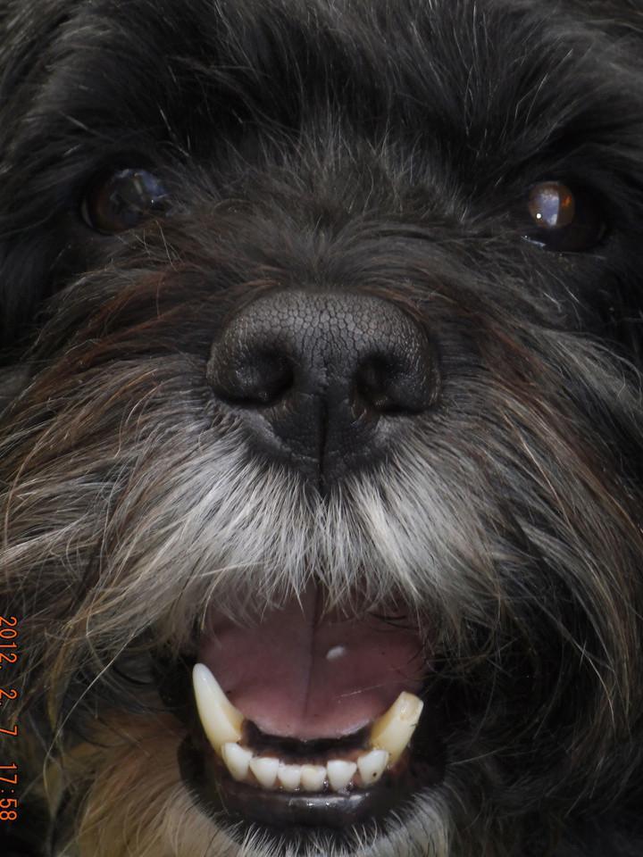 Bild von einem schwarzen Hund