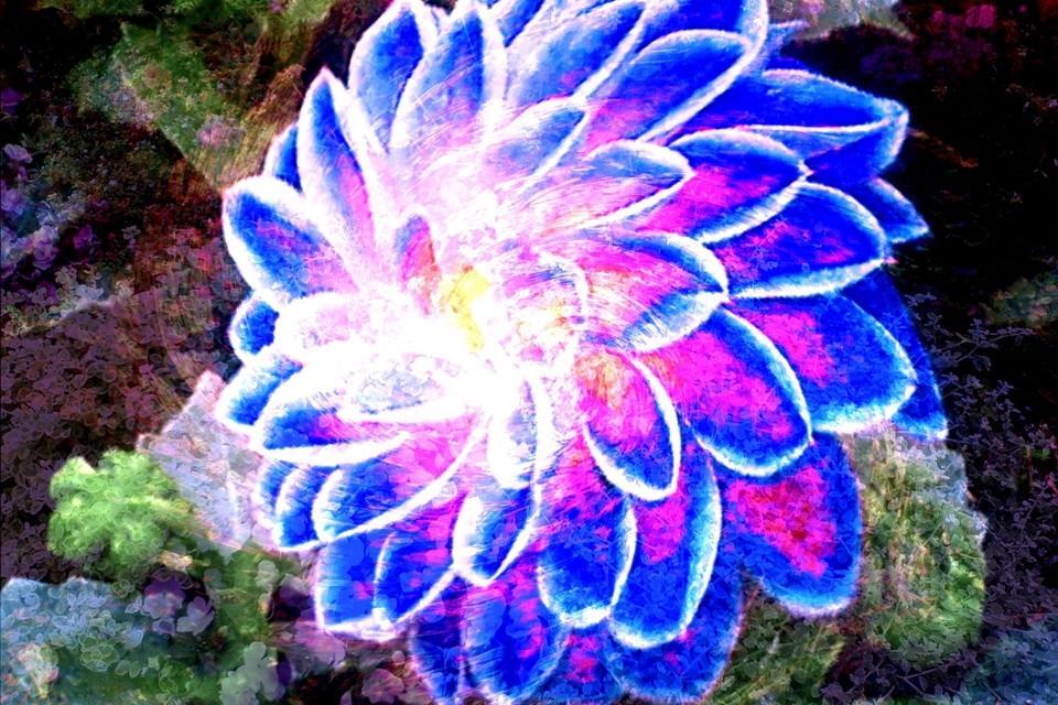 Bild von einer Blume