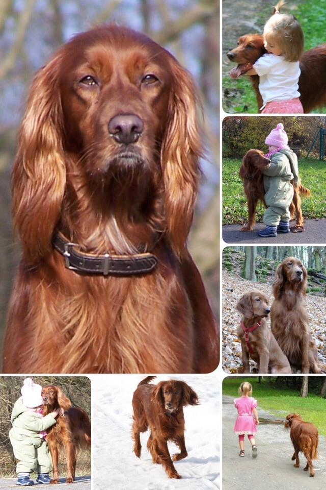 Bilder, Leinwand, Hund, Collage