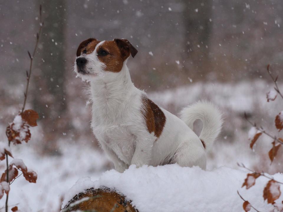 Hund, Druck, Leinwand