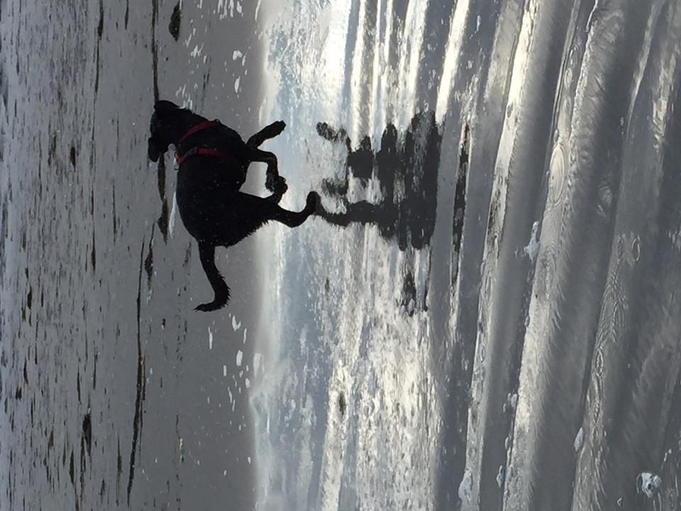 Tiere, Hunde, spielend