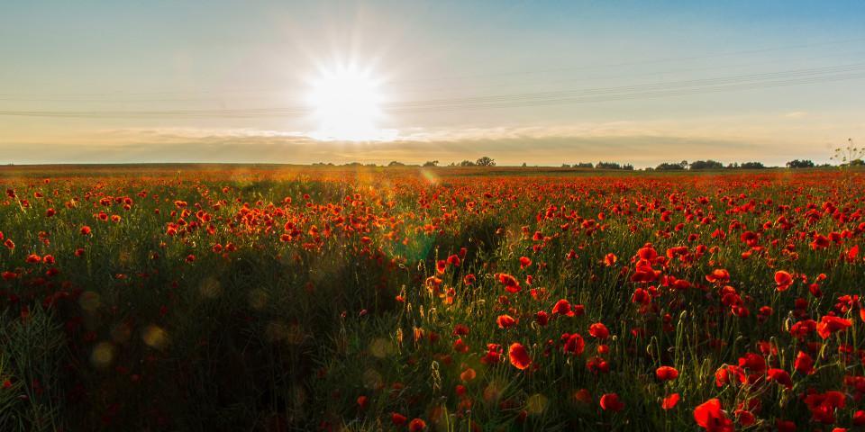 Blumen, Sonnenuntergang, Wiese, Schönheit
