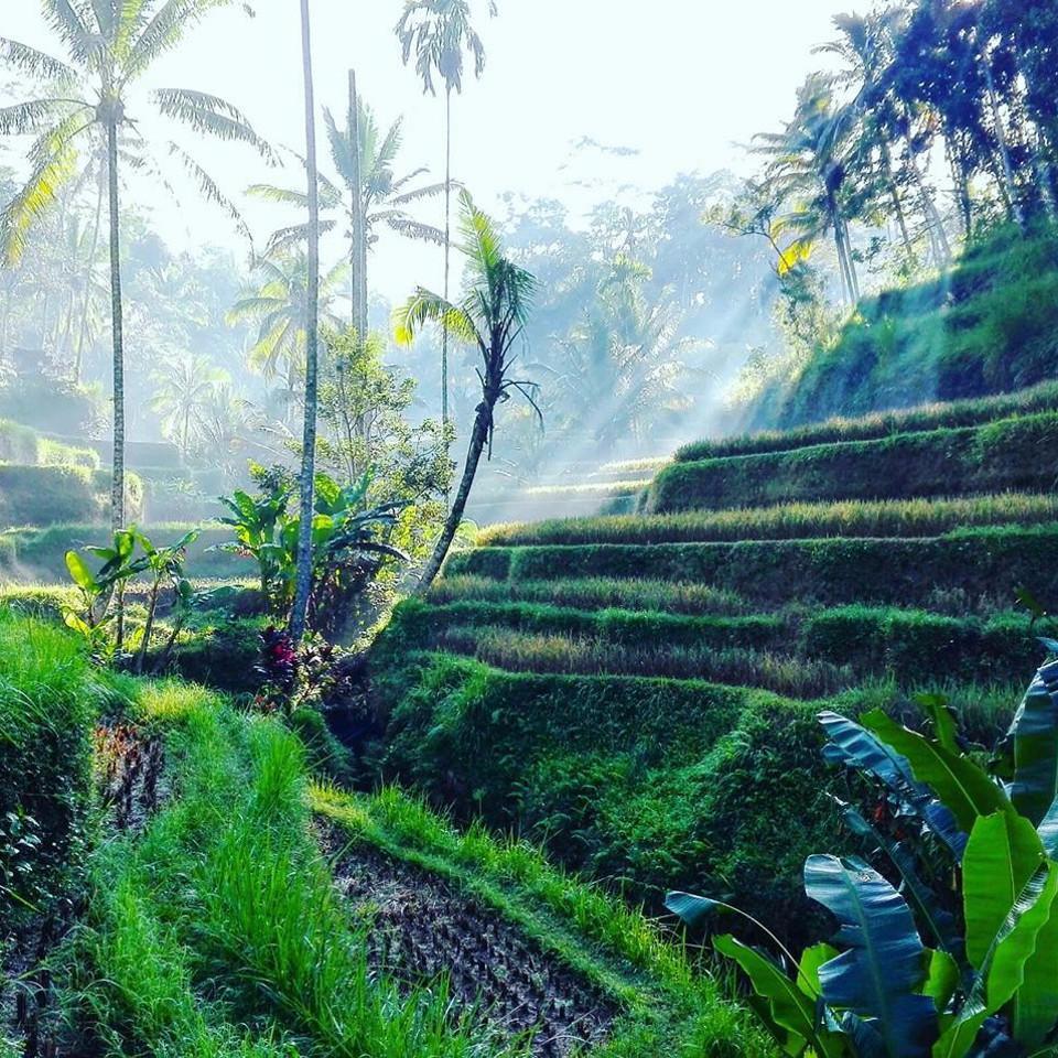 Bali, Dschungel, Ausflug, Schönheit