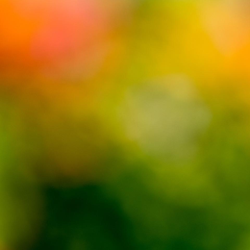 Kunstfotografie, Farbtöne, verwischen