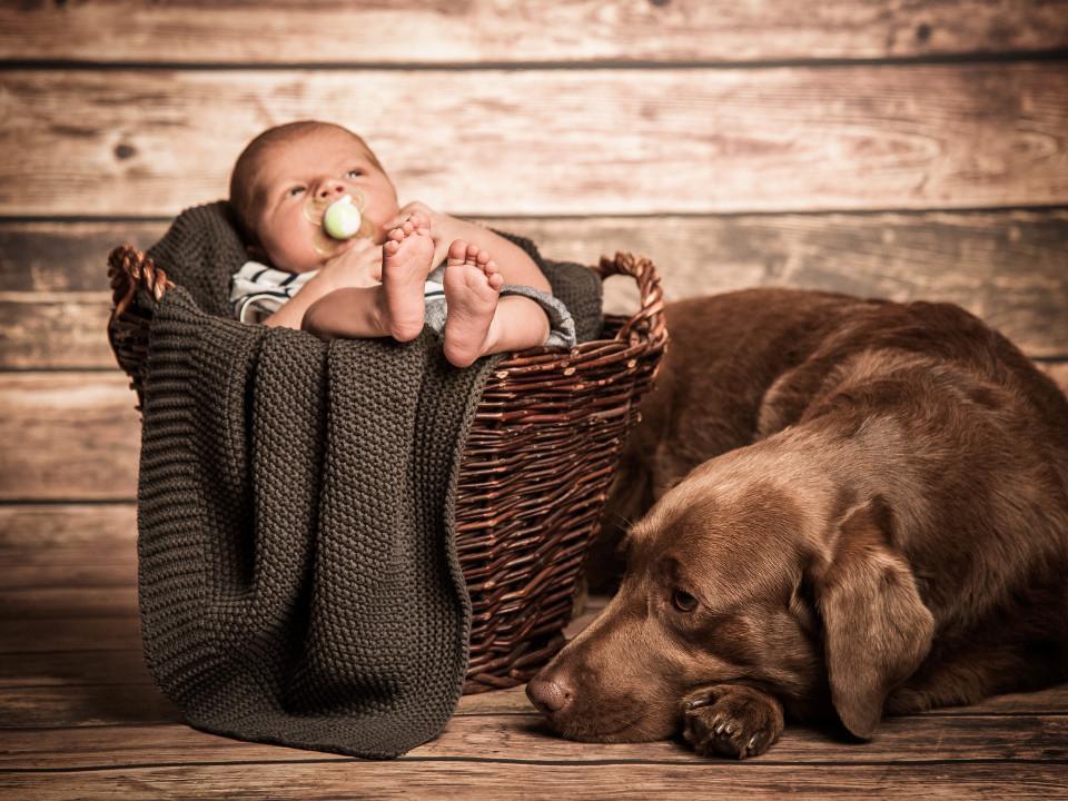 Baby, Korb, Hund