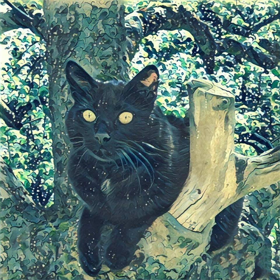 Katze, Zeichnung, Stilisierung
