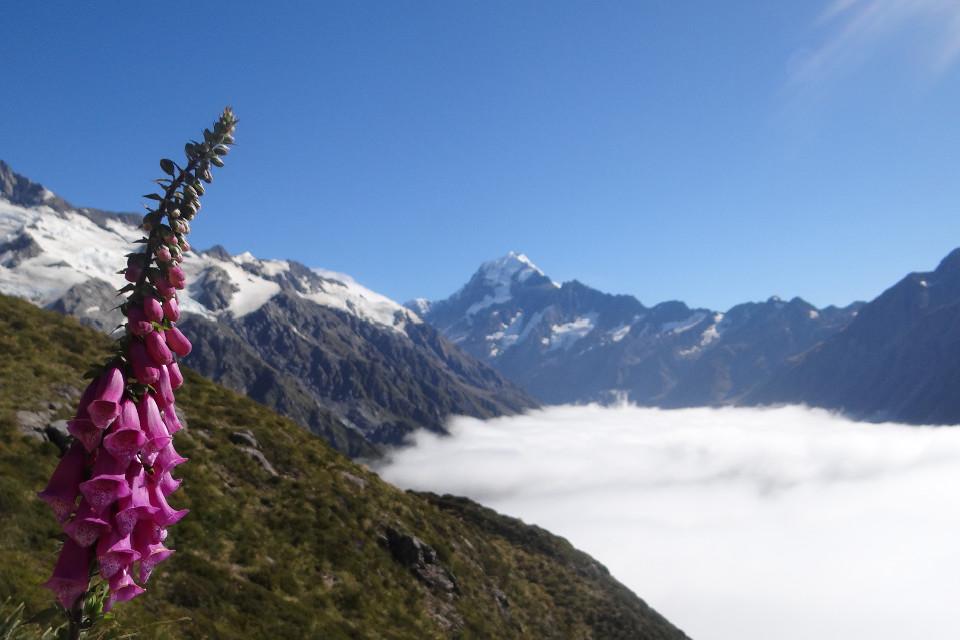 Berge, Bergspitze, Mount cook, Neuseeland