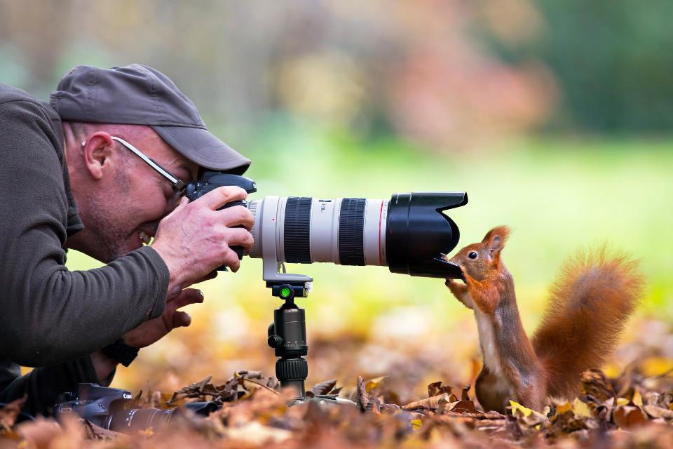 foto, Fotograf, Eichhörnchen, close-up