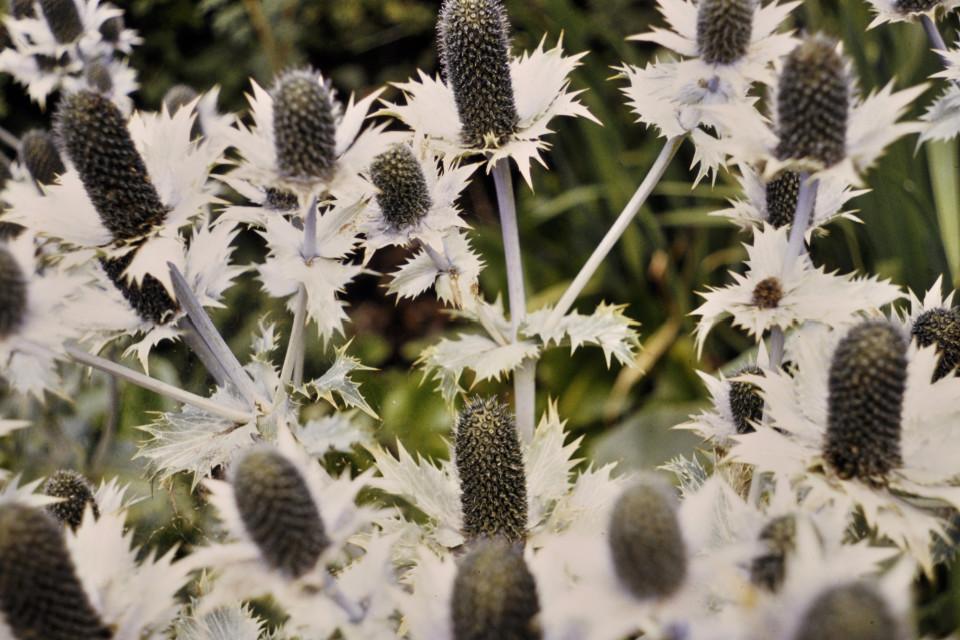 Natur, Pflanzen, eigenartige pflanzen, Nahansicht