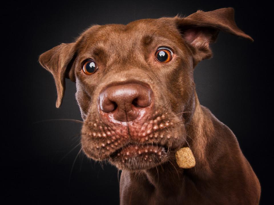 Tiere, hunde, schöner Hund, close-up