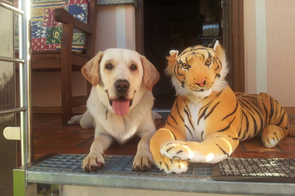 Hund, glücklicher Hund, Spielzeug Tiger