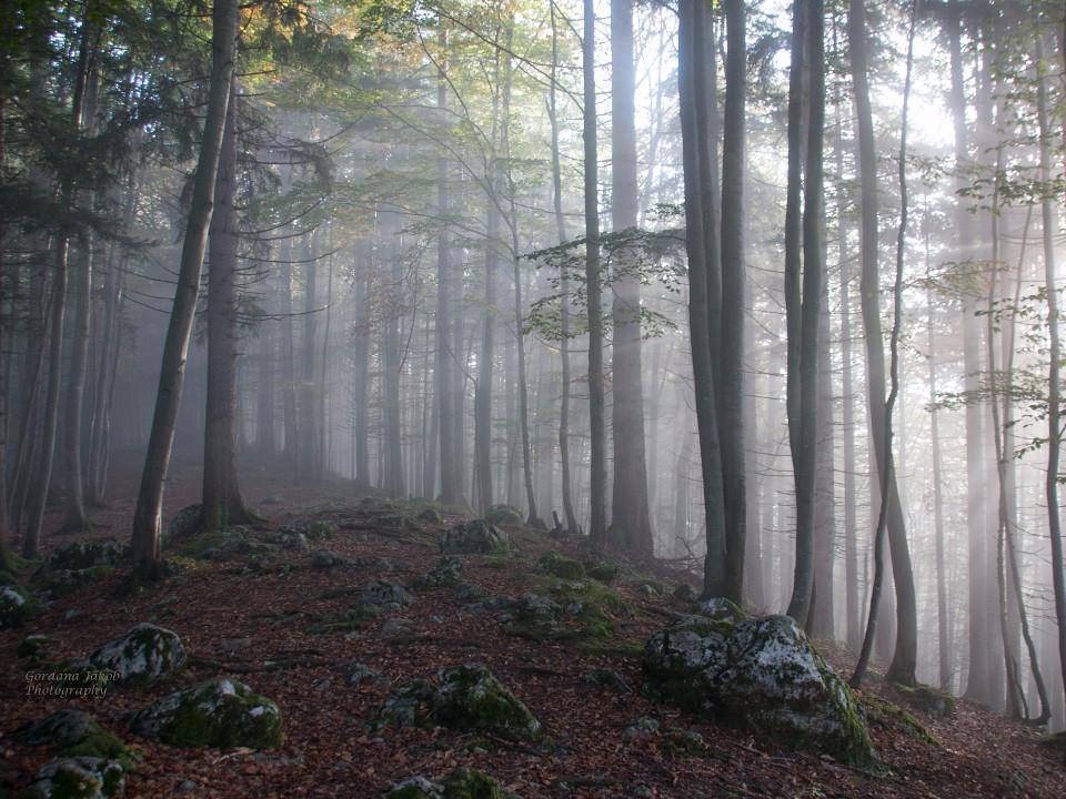 Wald, Nebel, Geheimnis, Märchenwald