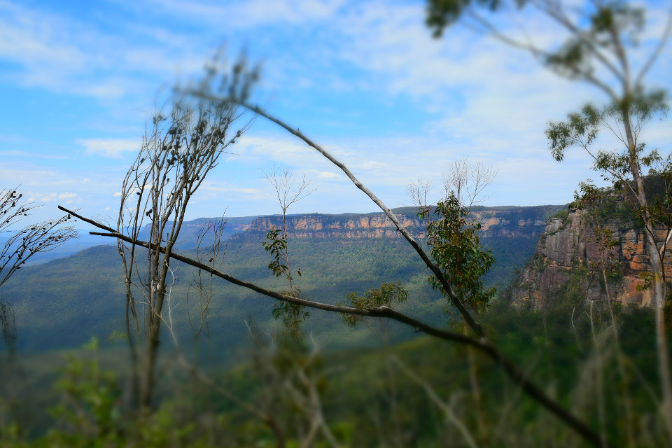 Australien, Blue Mountains, gebogenen Fuß