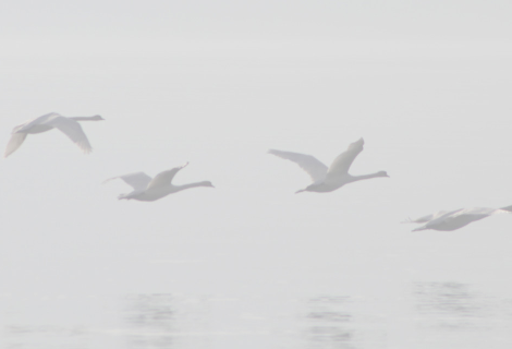 Verblassende Vögel