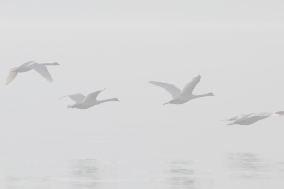 November, Nebel, Vögel