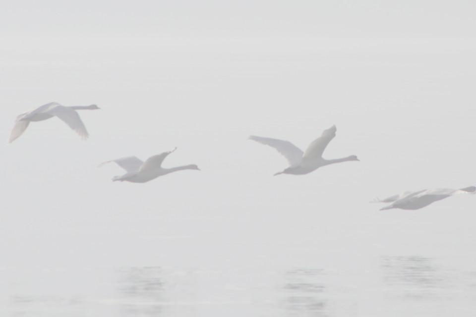 November, Nebel, Vögel