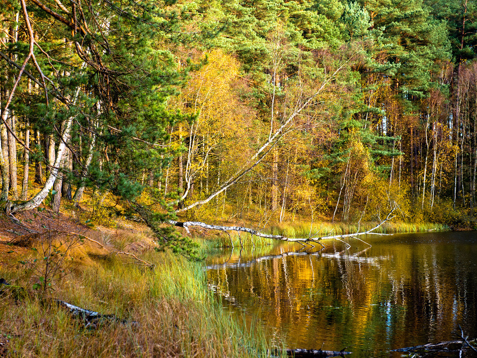 Herbst, Landschaft, orange Wald