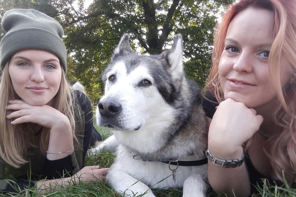 Tiere, hunde, Ruhe in Frieden, schöner Hund