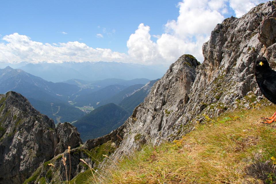 Berge, Felsen, Landschaft, Vogel, photobomb