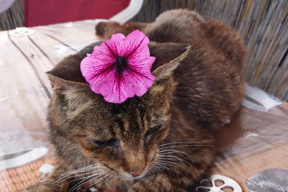 Tiere, Katze, Blume