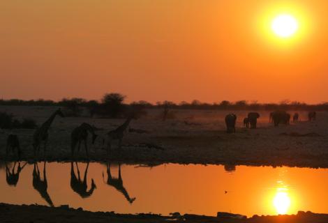 Ein Treffen in Afrika