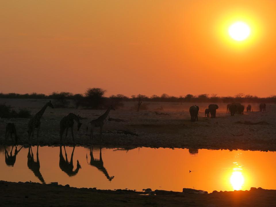 Exotisches Foto, Afrika, Sonnenuntergang, Elefanten, Giraffen