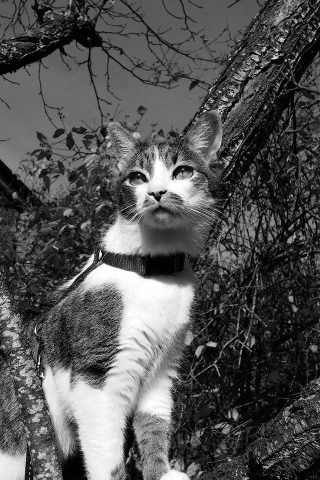 Tiere, Katzen, Auf einem Baum, krank, schwarzweiß
