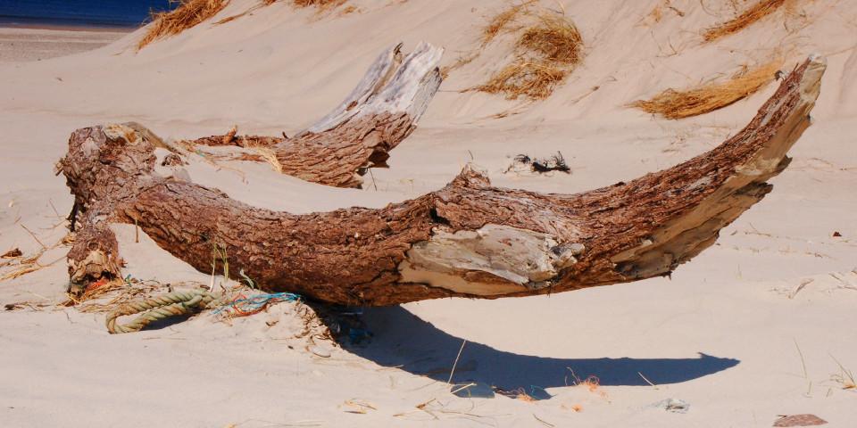 meer, strand, holz, An Land gewaschen