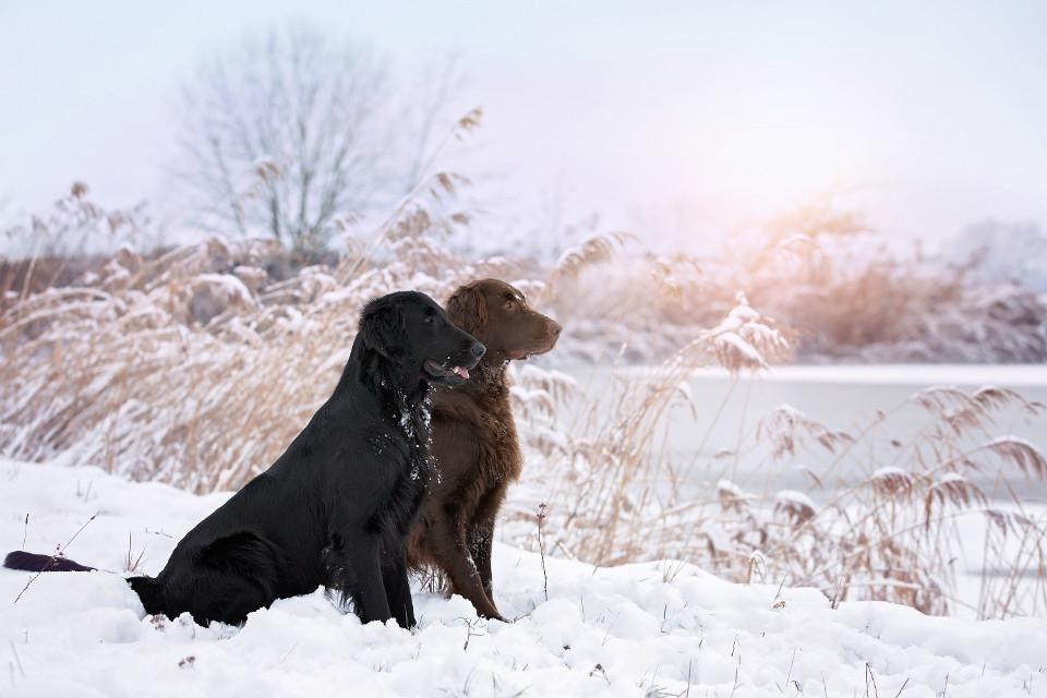Tiere, Hinde, winter, paar