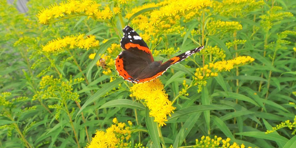 Blumen, Biene, Wiese, Schmetterling