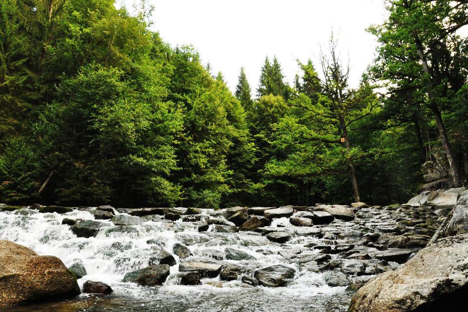 Wald, Fluss, Steine, Stromschnellen