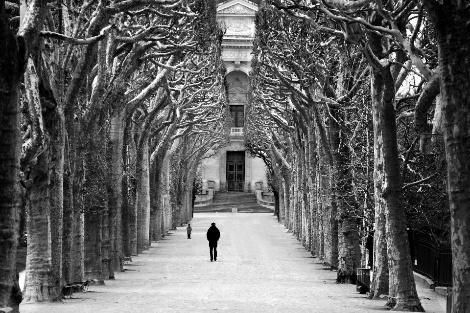 Gasse, Paris, Bäume, monochrom