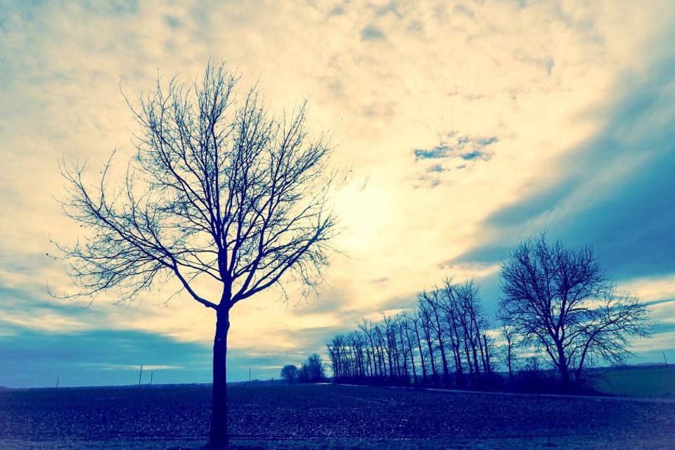 Fotos, heilen, Landschaft, Bäume, Filter