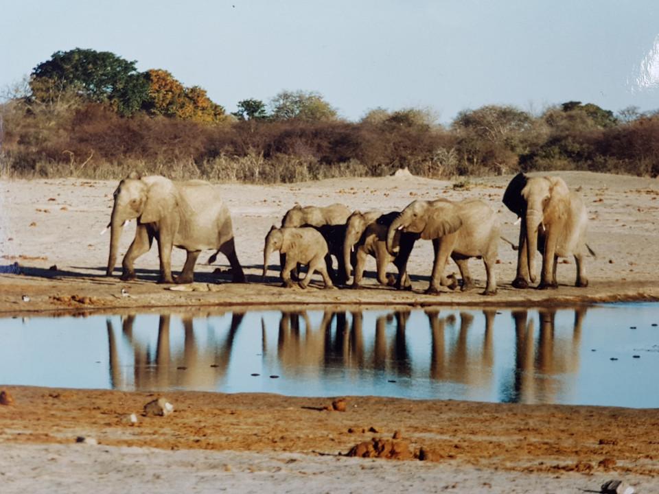 Afrika, Wiege des Lebens, Serengeti, Landschaft, Tiere, Elefanten