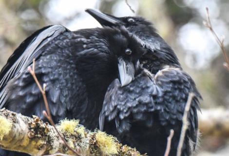 Vögel in der Liebe