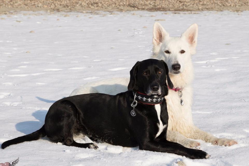Tiere, Hunde, Hund Paar, Schwarz und weiß, Edle hunde