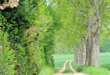 Haben Sie eine Frühlingswiese an Ihrem Platz