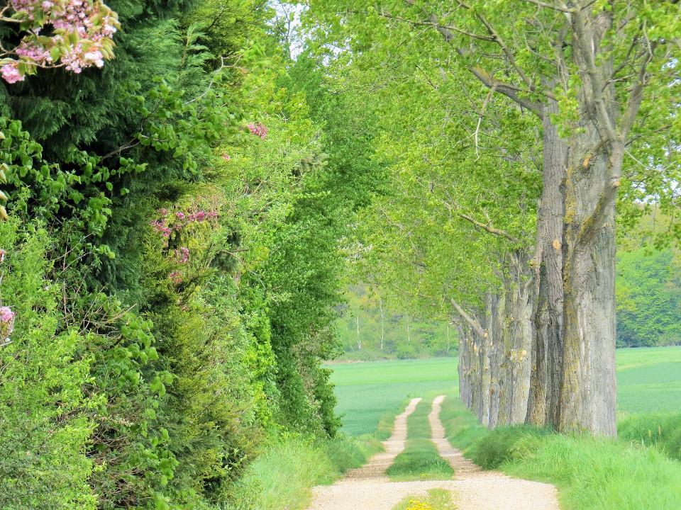 Grün, Frühling, Wiese, Straße, Landschaft